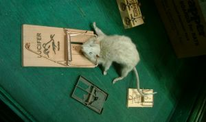 mice-in-a-mousetrap-9892-m