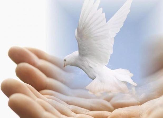 Dove hands